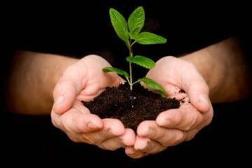 plant-a-tree-1024x804