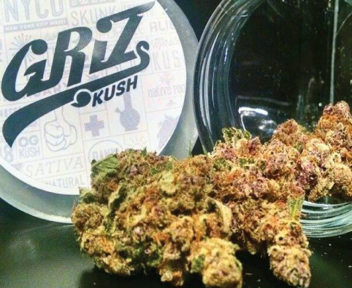 griz-kush-youredm
