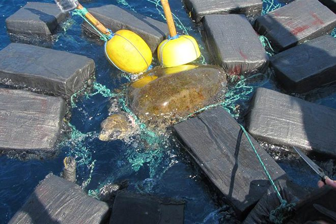 Turtle found floating in the sea tied to £40m of cocaine